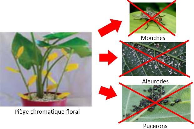 Pi ge chromatique floral guano diffusion - Produit naturel contre les pucerons ...