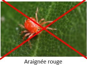 Contre les araignées rouges