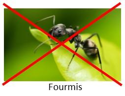 Contre les fourmis