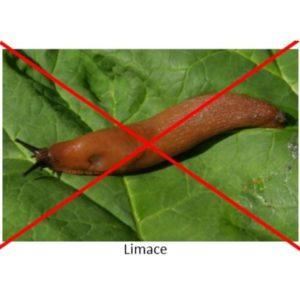 Contre les limaces