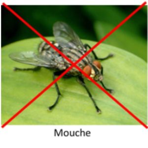 Contre les mouches