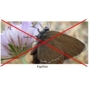 Contre les papillons